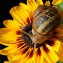 snail 4387540