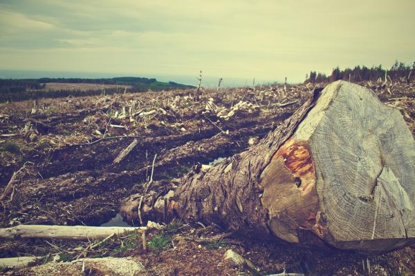 deforestation 405749 960