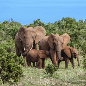 elephant family 2776148